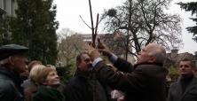 III Zasady Cięcia Drzew i Krzewów Ozdobnych