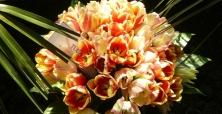 XIII Wystawa Tulipanów