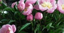 Wystawa Kwiatów i Pokaz Florystyczny w Suchym Lesie