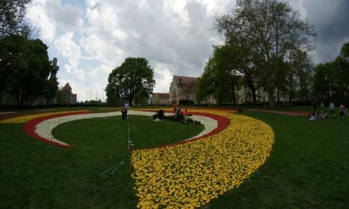 Poznańskie Dywany Kwiatowe-realizacja projektu