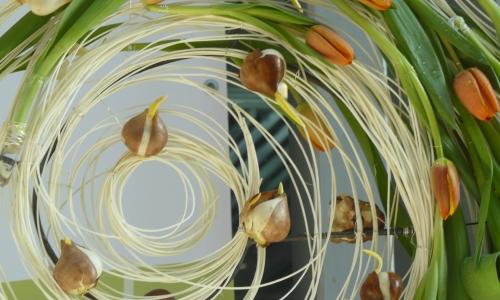 Konkurs dla kwiaciarń GARDENIA 2011