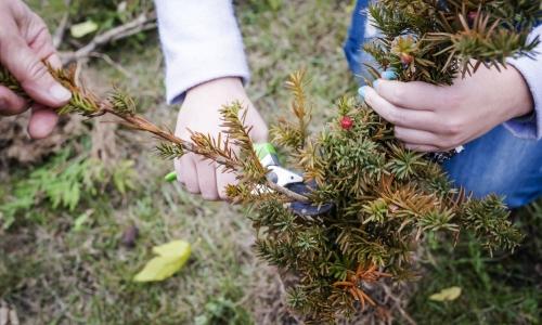 Przepisy prawa związane z usuwaniem drzew i krzewów..