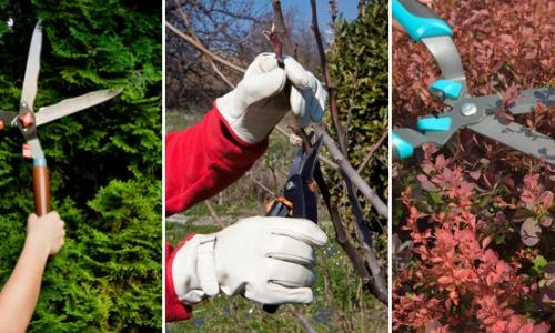 15. Zasady Cięcia Drzew i Krzewów Ozdobnych